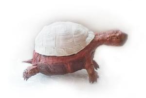 turtle mum