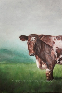 cow portrait-001