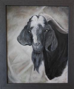 old goat-001
