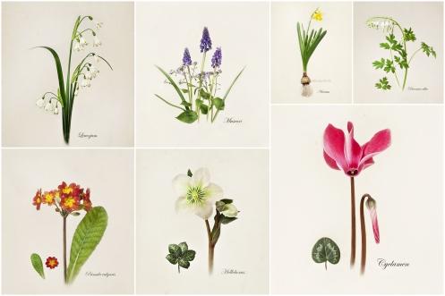 botanicals web