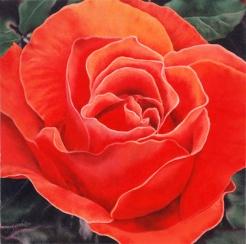 coral rose 20 x20