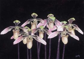 orchids 14 x 20