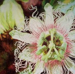 passion flower 36 x 36