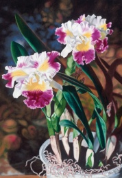 potted orchids 24 x 18
