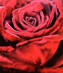 red rose 56 x 44