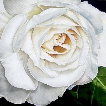 White rose 2 72 x 72
