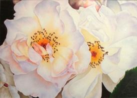 white roses 32 x 42
