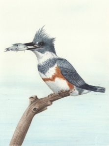 Kingfisher-72-dpi-tif-fixed