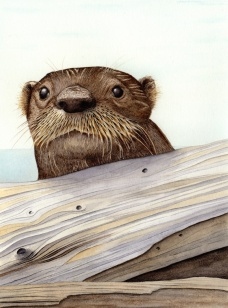 River-otter-72-dpi-jpg