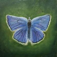 fenders blue